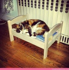 I Bought My Cat the Ikea Doll Bed She Wanted. Sweet Dreams …