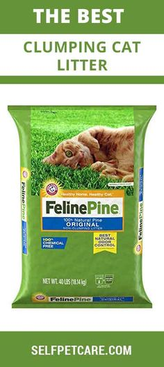 Ready to know about the best clumping cat litter of this world? This article is going to help you to select top rated clumping cat litter of this world Pine, Snack Recipes, Things To Sell, The Originals, Cats, Pine Tree, Snack Mix Recipes, Appetizer Recipes, Gatos