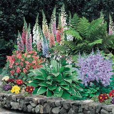 Shade Perennial Flowers, Helleborus, Ferns, Garden Plants, Shade Plants