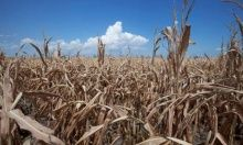 The Great Drying Strikes Again The drought gripping much of the U. may be a reprise of even worse ones the continent has suffered before By BRYAN WALSH Free Planet, Water Scarcity, Research Images, Dry Plants, Strikes Again, Need A Vacation, Scenic Design