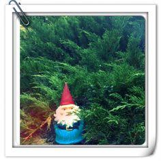 Gnomeson & The Juniper Bush