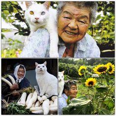 Fukumaru - a wonderful cat with different eyes