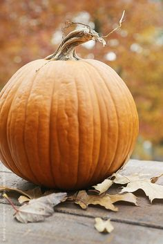 Oh dis plump wee Pumpkin is Phillip. He loves watching Humans smile at him from afar. For he is the Orange Joy bringer. God bless all Pumpkins and their Lovers!