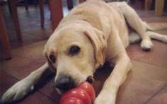Miglior giocattolo per cani: indistruttibile! #migliorgiocopercanisoluzione