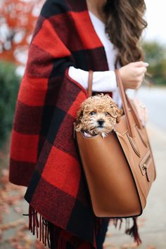 """UGG tall boots in """"chestnut suede""""   plaid wool cape scarf  // white long sleeve tee (only $19!) // Paige jeans   Celine ..."""