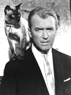 Bell Book & Candle Jimmy Stewart & Pyewacket - Siamese Cat - Ideas of Siamese Cat - Bell Book & Candle Jimmy Stewart & Pyewacket The post Bell Book & Candle Jimmy Stewart & Pyewacket appeared first on Cat Gig. Siamese Cats, Cats And Kittens, Ragdoll Kittens, Tabby Cats, Funny Kittens, Bengal Cats, White Kittens, Adorable Kittens, Black Cats