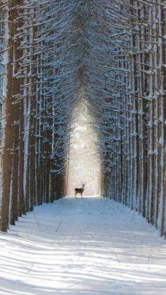 Rennes dans paysage de neige