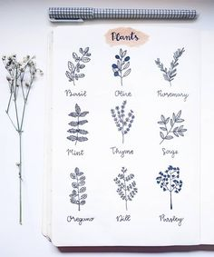 Bullet journal plant drawing ideas, planner doodles for spring