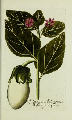 Jarhg.5 (1792) - Plantarum indigenarum et exoticarum icones ad vivum coloratae, oder, Sammlung nach der Natur gemalter Abbildungen inn- und ausländlischer Pflanzen, für Liebhaber und Beflissene der Botanik / - Biodiversity Heritage Library