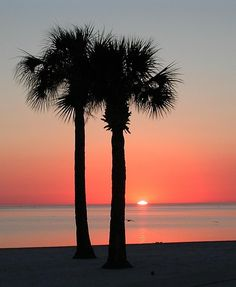 palm trees and sunset Beautiful World, Beautiful Places, Pink Sunset, Pink Beach, Beautiful Sunrise, Sunset Photos, Pretty Pictures, Great Photos, Palm Trees