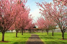 My entry would have spring blooming flowers like pink and white crab apple and beautiful yellow forsynthia