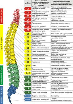 """The """"Hidden Survival Muscle"""" In Your Body Missed By Modern Physicians That Keep Millions Of Men And Women Defeated By Pain, Frustrated With Belly Fat, And Struggling To Feel Energized Every Day… Health And Beauty, Health And Wellness, Health Tips, Health Fitness, Spine Health, Medical Anatomy, Abdominal Pain, Anatomy And Physiology, Chiropractic"""