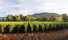 After 40 years of hard work, Caymus Vineyards is one of the world's most famous and consistently acclaimed wineries.