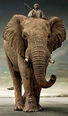 rider on tall elephant - Google Search