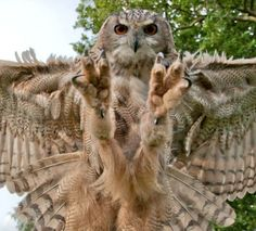 Owl Gets Pray;.  The last thing a field mouse sees.