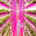 Old New Jersey Factory to House Earth's Largest Vertical Farm | Urbanist