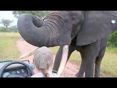 Extremely Close up elephant bathing with my Gopro - YouTube