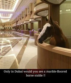 As the Dubai Cup approaches, the stars of the world's richest horse race need the absolute best in care, and a recently Tweeted photo proves that they're getting just that. With marble floors and opulent overhangs, these stables are unlike anything we've ever seen before. Let's hope that the horses are enjoying their R&R before race day!