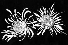 Chrysanthemumsby Aleksandra Kabakova    http://www.redbubble.com/people/lexihastra/works/7858611-chrysanthemums
