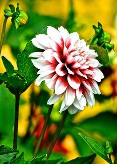 Scenic Bouquet by Robert Harmon
