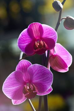 Orchid Plant Care, Orchid Plants, Growing Orchids, Fauvism, Diy Flowers, Gardening Tips, Natural, Garden Ideas, Bloom