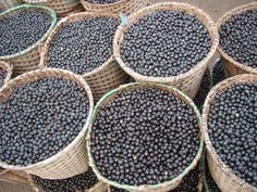The açaí palm is a species of palm tree in the genus Euterpe cultivated for its fruit and superior hearts of palm. Its name comes from the Portuguese adaptation of the Tupian word ïwaca'i, '[fruit that] cries or expels water'. Green Tea For Weight Loss, Yoga For Weight Loss, Acai Fruit, Best Green Tea, Ginger Benefits, Cardio Equipment, Fresh Fruits And Vegetables, Workout Machines, Purple