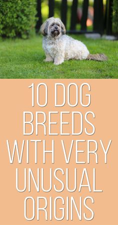 10 Dog Breeds With Very Unusual Origins