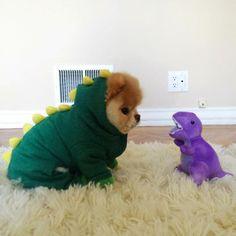 Boo! Cutest dog ever haha