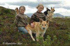 Photographs of the Icelandic Sheepdog