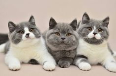 Excellent Snap Shots cats and kittens mice Thoughts While you deliver a different cat straight into your house, it is really an thrilling occasion, as well as fo Cute Cats And Kittens, I Love Cats, Crazy Cats, Cool Cats, Kittens Cutest, Gato Animal, Mundo Animal, Pretty Cats, Beautiful Cats