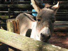 Donkey : Kawasaki Yumemigasaki animal Park in Japan