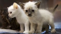 Baby animal pictures may boost focus at work. From CBS News. A clear explanation of the recent research that  suggests looking at pictures of baby animals may boost human productivity.