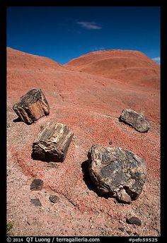 Petrified wood on red badlands,. Petrified Forest National Park, Arizona