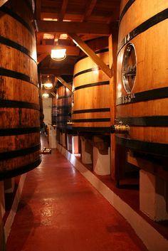 Un cuvier traditionnel, dans un château du Médoc *vins de la région de Bordeaux*