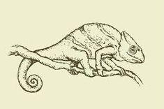 Výsledok vyhľadávania obrázkov pre dopyt chameleon kresleny Chameleon, Moose Art, Lion Sculpture, Statue, Drawings, Illustration, Animals, Animales, Animaux
