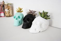 skull with succulents growing out of the crown