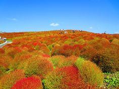 <h3>2. Парк Хитачи-Сисайд, Япония</h3><p>В этом великолепном месте сосредоточены миллионы цветов, которые протянулись на площади в 190 гектаров. Неважно, в какое время вы приедете сюда, что-то обязательно будет цвести.</p>
