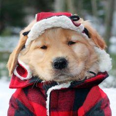 prêt pour l'hiver !