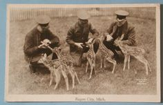 1949 ROGERS CITY Michigan Conservation RPPC Feeding Fawn Deer Photo Postcard