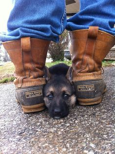 Wicked Training Your German Shepherd Dog Ideas. Mind Blowing Training Your German Shepherd Dog Ideas. Cute Puppies, Cute Dogs, Dogs And Puppies, Doggies, Rottweiler, Baby Animals, Cute Animals, Photo Animaliere, Pit Bull