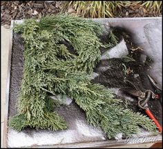Dittle Dattle: Fresh Cedar Monogram Wreath