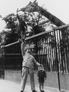 Circus strongman Paul Remos and his six and seven year old sons, feeding a giraffe at London Zoo.  ca. 1950. ☚