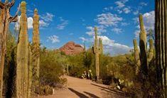 Sonoran Desert Nature Walks & Hiking Trails in Phoenix Desert Botanical Garden Phoenix, Arizona Attractions, Birmingham Botanical Gardens, Myrtle Tree, Denver Botanic Gardens, Fun Deserts, Garden Photos, Walking In Nature, Begonia