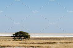Tree in desert by Zedig Design on @creativemarket