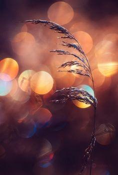 Яркие и сочные боке в снимках Джони Нимела (Joni Niemelä)