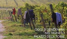 Harvest Life, at Palazzo della Torre, Valpolicella, Italy.