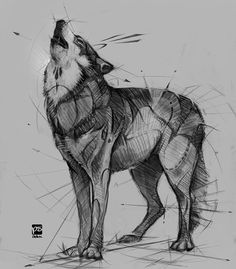 Gryphon Sketch Psdelux - Wolf Sketch Psdelux by psdeluxe - Animal Sketches, Animal Drawings, Drawing Sketches, Art Drawings, Wild Animals Drawing, Wolf Drawings, Drawing Drawing, Wolf Tattoos, Animal Tattoos
