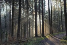 Sunrays in Fogged Forest