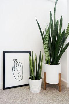 Inside plants decor - 26 Gorgeous Interior Design with Indoor Plants – Inside plants decor Plant Aesthetic, Nature Aesthetic, Flower Aesthetic, Aesthetic Green, Jade Plants, Green Plants, Silk Plants, Bamboo Plants, Nature Plants