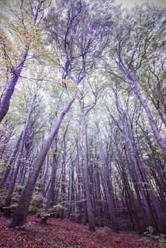 Retro filtered picture of a forest. by Maciej Bledowski on 500px